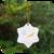 kerstster van porselein vlieg